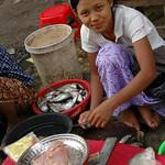 Burmese Woman Cleaning Fish - Rangoon, Burma (Yangon, Myanmar)