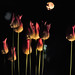 Tulips...on a stick by docksidepress