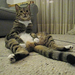 90 seconds of my cat sitting upright by pokeweedthecat