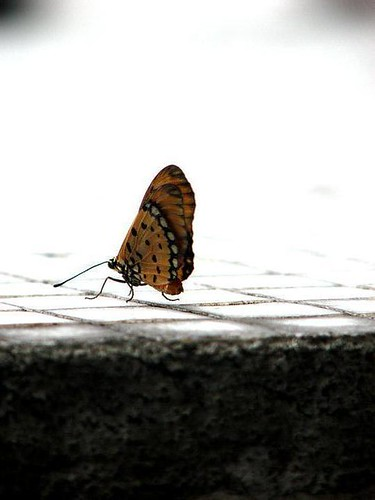 Butterfly's Side  by Janielle Beh