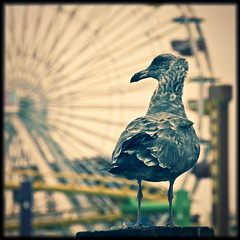 The bird and the ferris wheel
