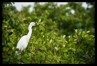 Il mitico uccello Cuccubiu