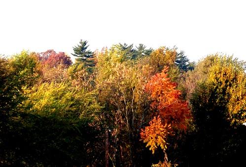 trees sky tree home scenery springfieldmissouri theozarks rottlady rottladyhome