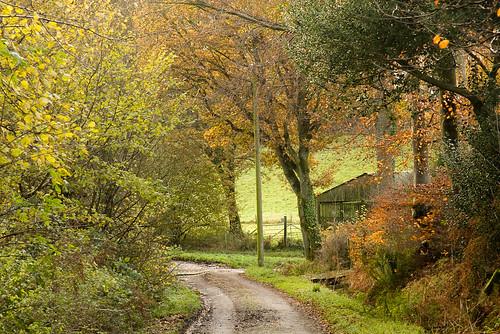 Looking back to Fernden Lane