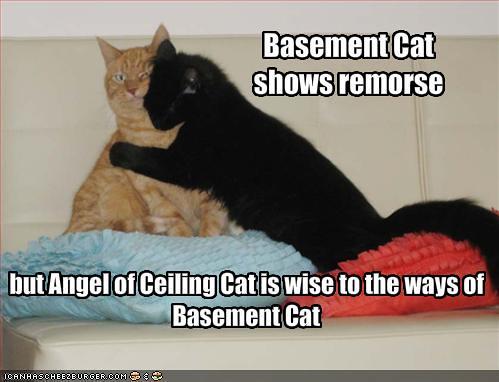 basement cat shows remorse explore hulk smash 39 s photos o