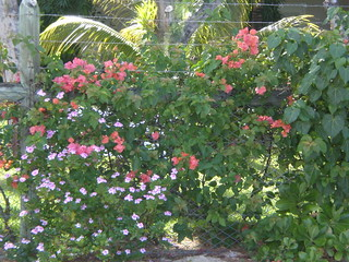 lovely flowers in MAU