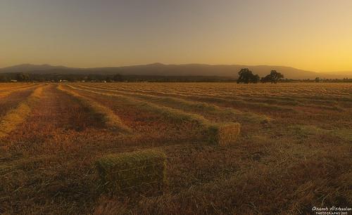 Harvest Time [Explored]
