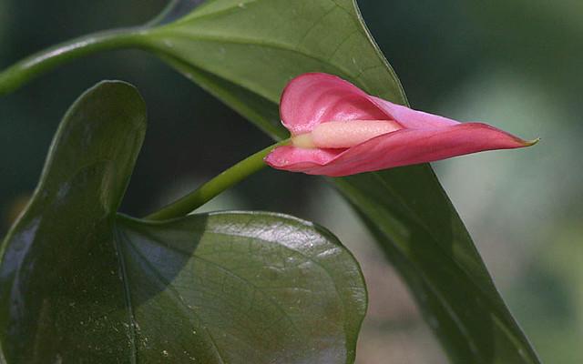 Flower - Macro 6291