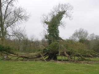 Strange dead tree
