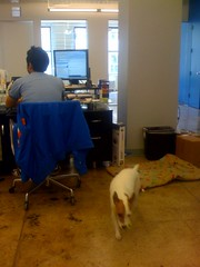 Converseon does 'Take Your Dog To Work Day