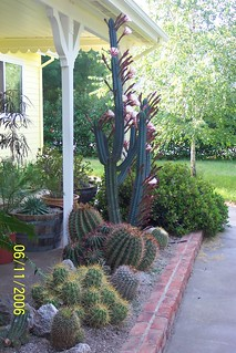 Cactus Display 2