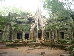 Taprohm Temple, Cambodia