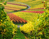 Vineyard by Habub3
