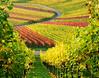 Vineyard by Habub3