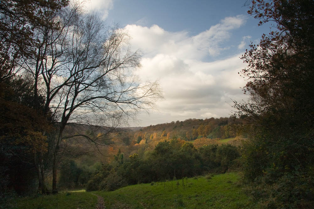 View of Marley Common from Valewood Farm