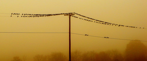 morning trees friends sleeping birds fog t wire power close line pole perched 214 greeneyephoto 214closefriends