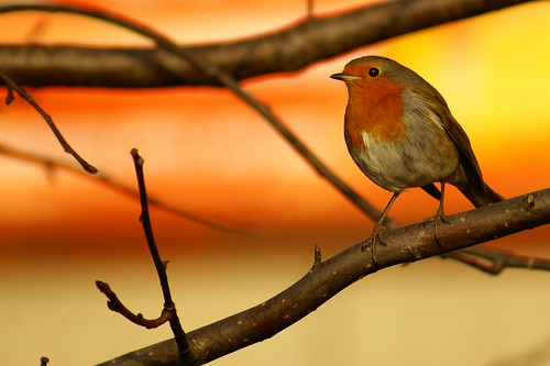 Red, Red Robin by julian sawyer