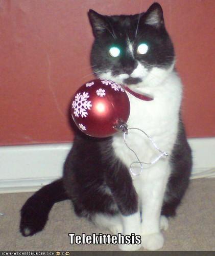 funny-pictures-cat-telekinesis