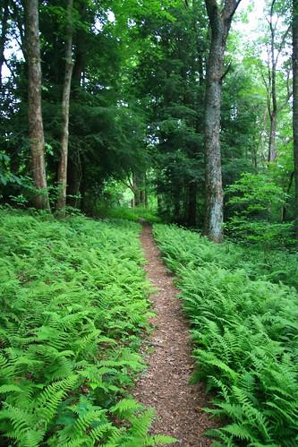 trees fern green georgia geotagged trail return wilderness ferns cohuttawilderness returntrip
