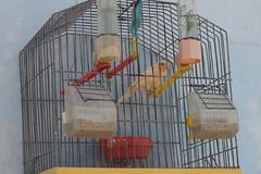 cage, pet,