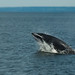 Whales, Dolphins, and Porpoises - Photo (c) Rene Ehrhardt, some rights reserved (CC BY)