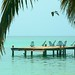 Bird Over Pier. Tobacco Caye, Belize.