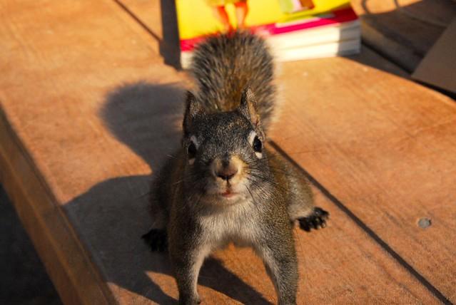 best annoying animal ever   Flickr - Photo Sharing!