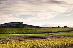 Vineyardgolf Course
