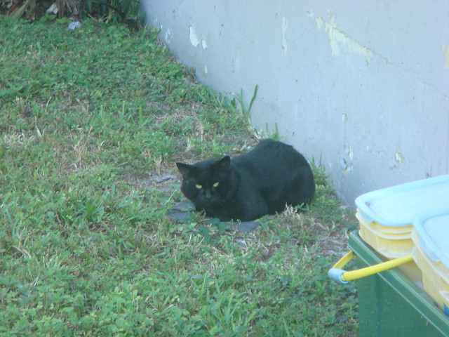Stray cat in the yard | Flickr - Photo Sharing!