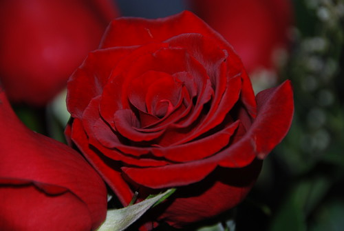 As the New Year unfolds like a beautiful rose petals.......