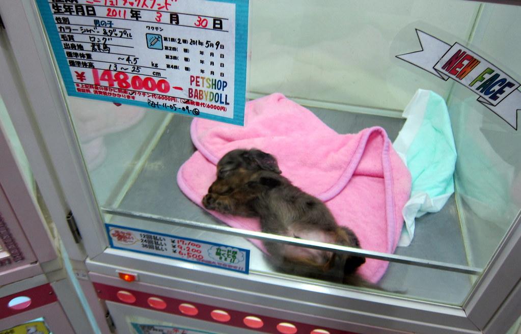 Pet Shop Tokyo Tokyo Shibuya Baby Doll Pet