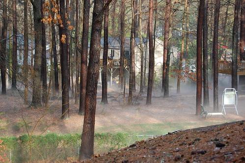 trees mist hail woods