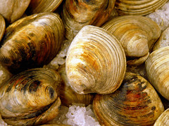 sea snail(0.0), schnecken(0.0), produce(0.0), escargot(0.0), dish(0.0), animal(1.0), clam(1.0), seafood(1.0), invertebrate(1.0), food(1.0), cockle(1.0), clams, oysters, mussels and scallops(1.0), mussel(1.0),