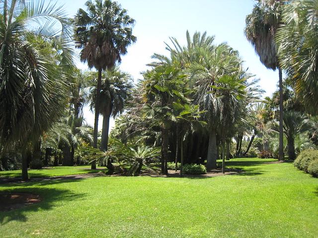 Exploring the Huntington Desert Garden
