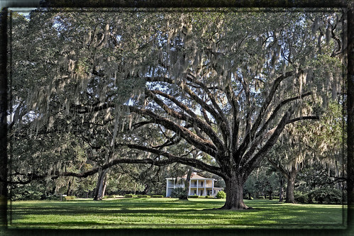 statepark panorama tree home florida eden hdr