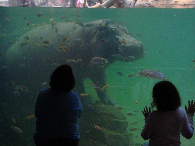 2008 03 16 Camden 010 New Jersey State Aquarium Flickr