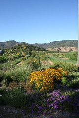 Flower Garden - The French Laundry