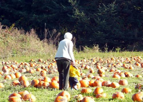 2008-10-27 pumpkins (7)