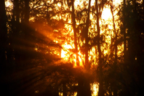 sunset orange sun tree photoshop manipulated landscape evening louisiana swamp spanishmoss cypress rays 2008 adjusted orton roygbiv dx6490 lakemartin 7899 cmwdorange