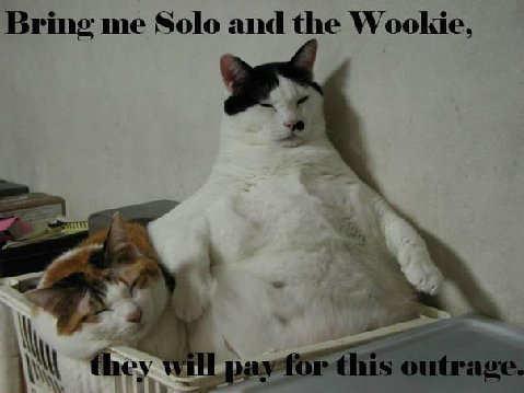 3059099903 6641fa73dd funny cats a 014