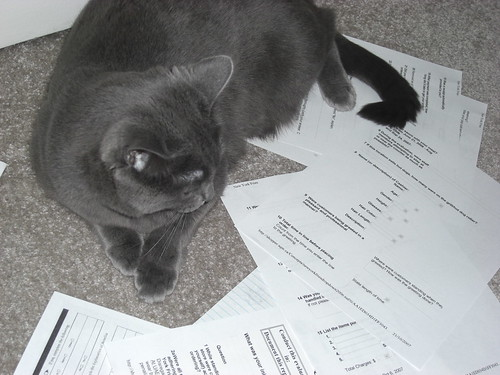 Cat accountants