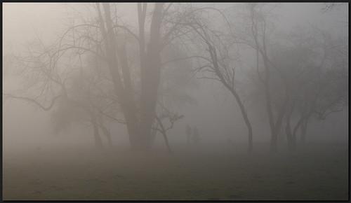 morning trees people dogs misty walking geotagged sunday dzwjedziak anawesomeshot impressedbeauty parkjordana geo:lat=50063537 geo:lon=19915177