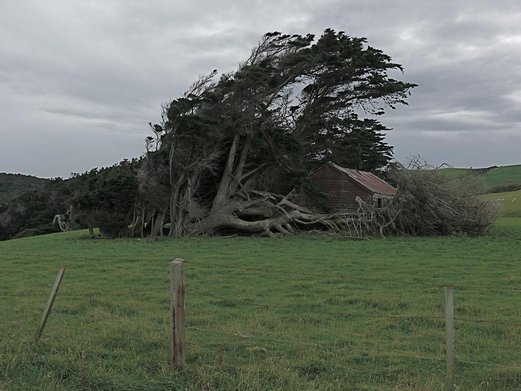 Новозеландские криволесья