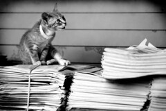 newspaper kitty by Brittany Randolph, on Flickr