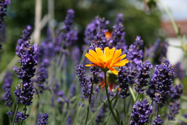 Flowers for British bats