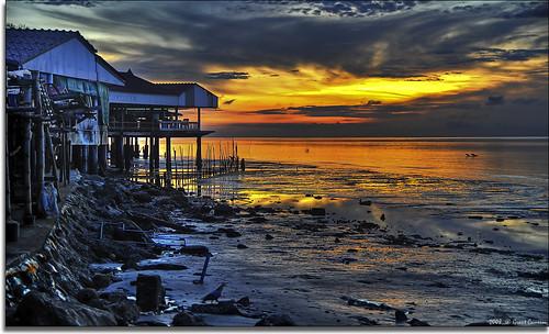 sunrise river thailand dawn shell sandbar clam mangrove mae forests razor mollusk klong bivalve samut cockle songkhram ดอนหอยหลอด p1f1 holidaysvacanzeurlaub donhoilot grantthai grantcameron hoilot hoilai undulatedsurfclam hoipuk ridgedvenusclam hoipakpet tongueshell hoikhraeng