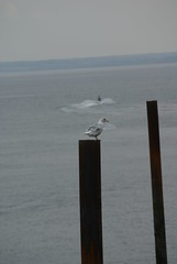 Hartlepool Sea Gull