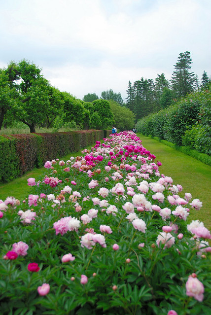 The Long Peonie Border at Penshurst Place