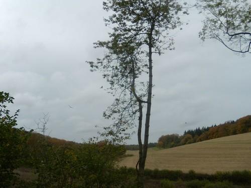 tree, 2 kites