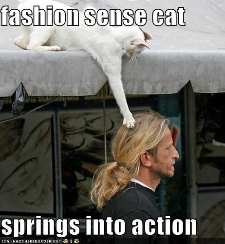funny-pictures-fashion-sense-cat-springs-into-action